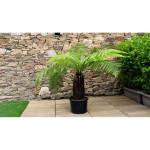 Plantes topiaires et originales